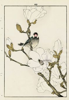 White Magnolia, Java Sparrow from Imao Keinen Kacho original Japanese woodblock prints of birds and flowers