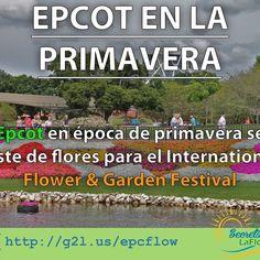 Epcot parque temático de Walt Disney World se viste en época de primavera con las mejores flores y jardines para recibir el International Flower & Garden Festival ==> http://g2l.us/epcflow