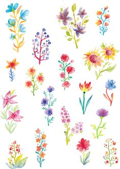 Watercolor Flowers by TatianaCociorva on Creative Market