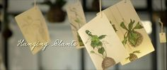 * http://anthologymag.com/blog3/2013/04/09/opus-hanging-plants/