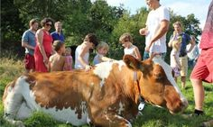 Over FarmCamps Glamping, Holland, Tent, Cow, Adventure, Luxury, Kids, Animals, Outdoor