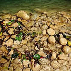 Shallows Damajagua River, a close up look at the limestone rocks on the shore of this river in the Dominican Republic, available as a fine art print or on products, world wide shipping #art #photography #abstractart #rocks #dominicanrepublic #limestone