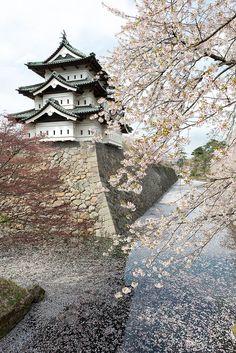 弘前公園の桜 Hirosaki Castle, Aomori, Japan