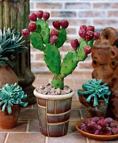 Learn how to grow prickly pear cactus in this article. Growing prickly pear cactus and its care is not difficult, if you grow it in right growing conditions.