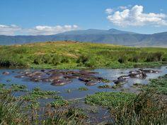 Hippos!! Ngorongoro Crater Tanzania