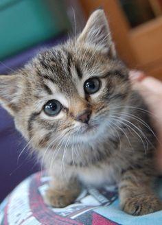 I want a kitten so bad !