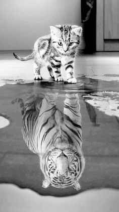 Cute Coloring Pages Of Baby Animals round Cute Funny Animals Pictures Hd a Cute Animals Sleeping Images one Adorable Ginger Kittens round Cute And Funny Kitten Videos Baby Animals Super Cute, Cute Baby Cats, Cute Little Animals, Cute Funny Animals, Kittens Cutest, Funny Cats, Super Cute Kittens, Cats Humor, Funny Horses