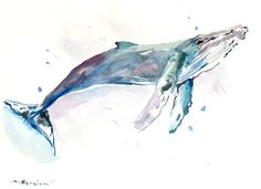 Humpback Whale , 15 X 11 in, original watercolor painting, whale art, sea animal art, seaworld