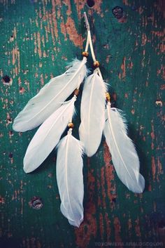 white feathers - the sign of the angels - shape
