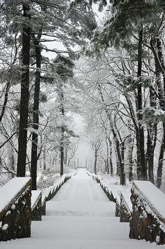 Snow on the Vista Steps.