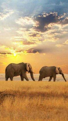Veel dieren spotten in Zuid Afrika. Deze zomer hopelijk! !