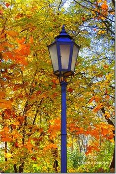 blue lamp post with fall backdrop = pretty