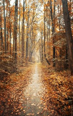 A autumn trail that I would love to walk .I love the smell of the leaves and the autumn earthy smells that emit into the atmosphere...