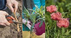 Envie d'un bouquet sec ? Voici les gestes à suivre pour conserver vos hortensias !