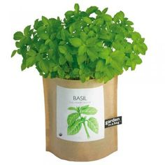 Basil -- Cure for: Tummy troubles  Studies suggest that eugenol, a compound in basil, can keep your gut safe from pain, nausea, cramping, or diarrhea by killing off bacteria such as Salmonella and Listeria. Eugenol even has an antispasmodic property that can keep cramps at bay, says Mildred Mattfeldt-Beman, PhD, chair of the department of nutrition and dietetics at Saint Louis University. Use minced fresh basil in sauces or salads.