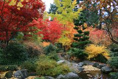 Todos los colores del otoño a pleno! (hermosa vista)(jpd)