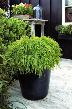 Best Australian native plants for pots and containers Australian Native Garden, Australian Plants, Australian Flowers, Potted Plants Patio, Landscaping Plants, Pot Plants, Vertical Garden Wall, California Native Plants, Walled Garden