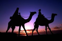 Magical Nature Tour — Caravan by yoakenobang :) Large Animals, Animals And Pets, Cute Animals, History Of Islam, Twilight Sky, Arts And Crafts For Teens, Royal Christmas, Black Silhouette, Sunset Silhouette
