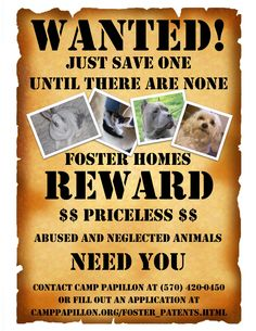Foster Homes Needed, Can you help?