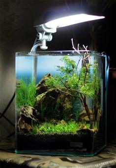 DENNERLE Nano Cube® Contest 2013. Quality test. Results | Все для аквариума, террариума и пруда