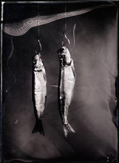 Hareng2, photography by Jean-baptiste Senegas