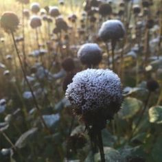 A touch of frost means winter isn't too far away. Time to put on shoes for my morning walk in the garden. Even so it's sure pretty isn't it? #wisconsinhomemaker