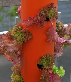 Unsere Salatbaum-Anleitung zum selber bauen. // How to plant a salad tower.