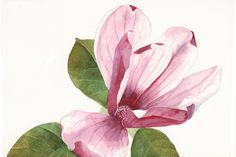 Magnolia painting print of watercolor painting 5 by Splodgepodge. $15.00, via Etsy.