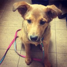 Calli did very well at during her first vet visit at MEVC. Such a sweet puppy! #puppyvaccinations #millwoodseastpets #edmontonvet
