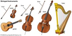 stringed instruments reference image