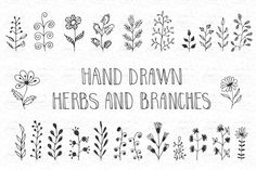 Branch Vector, Wreath Drawing, Drawing Frames, Tree Patterns, Logo Background, First Contact, Pattern And Decoration, Doodle Drawings, Bible Art