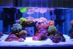 Shallow Illuminated Tank from Thailand - Reef Central Online Community Seahorse Aquarium, Coral Reef Aquarium, Saltwater Aquarium Fish, Saltwater Tank, Marine Aquarium, Nano Reef Tank, Reef Tanks, Biorb Fish Tank, Reef Aquascaping