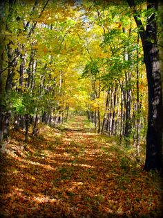 Hoover Forest Preserve, Kendall County Illinois