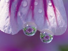 Dew drops...
