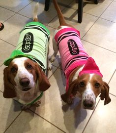 Basset hounds in costume. ❤️