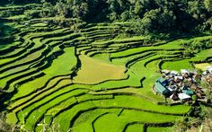 Photo about Rice terraces in Bagaan,Philippines. Image of terrace, rice, province - 14327987 Borneo, Trekking, Banaue Rice Terraces, Thailand, Destinations, Philippines Culture, Kayak, World Heritage Sites, Cool Places To Visit