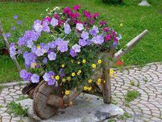 Flores lindas no carrinho de mão, quanta criatividade, inspire-se nessas dicas e faça o seu jardim florido e lindo