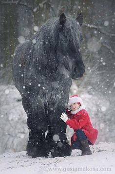 gorgeous horse in snow