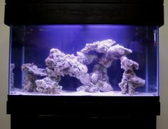 Live Rock Aquascape Designs Live Rock Set Up Idea Fish Tank For The Kids