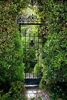 Entrance to the Secret Garden. Entrance to the Secret Garden. Garden Entrance, Garden Gates, Wedding Entrance, Clematis, The Secret Garden, Secret Gardens, Gabion Fence, Luz Natural, Garden Cottage