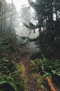 moody-nature:  Northwest | By spacelace