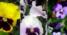 ¿Quieres esta preciosa flor en tu jardín? ¡Apunta!