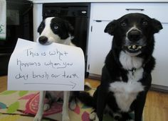 Anyone know a good doggie dentist?