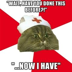 """Nursing Student Cat - """"Wait, have you done this before?!"""" """"...Now i have"""""""