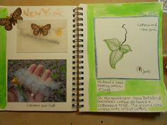 Nature Journal Page with something you collect: Use an envelope to hold the item like this cottonwood.