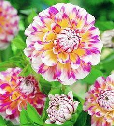 Soft colors.. Flowers