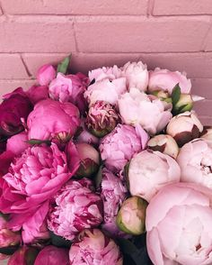 I wish these would last forever #peonies #ombré #weekendmoments #pink