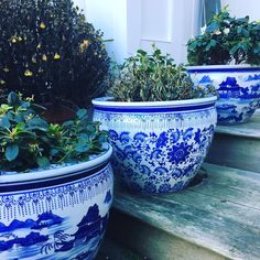 Pin on Blue and white happiness! Pin on Blue and white happiness! Blue Willow China, Blue And White China, Blue China, Delft, Porches, Himmelblau, Blue Plates, Ginger Jars, White Decor