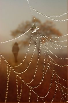 My lost jewels: Photo by Photographer Floriana Barbu - photo.net