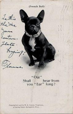 Vintage French Bulldog Puppy photo